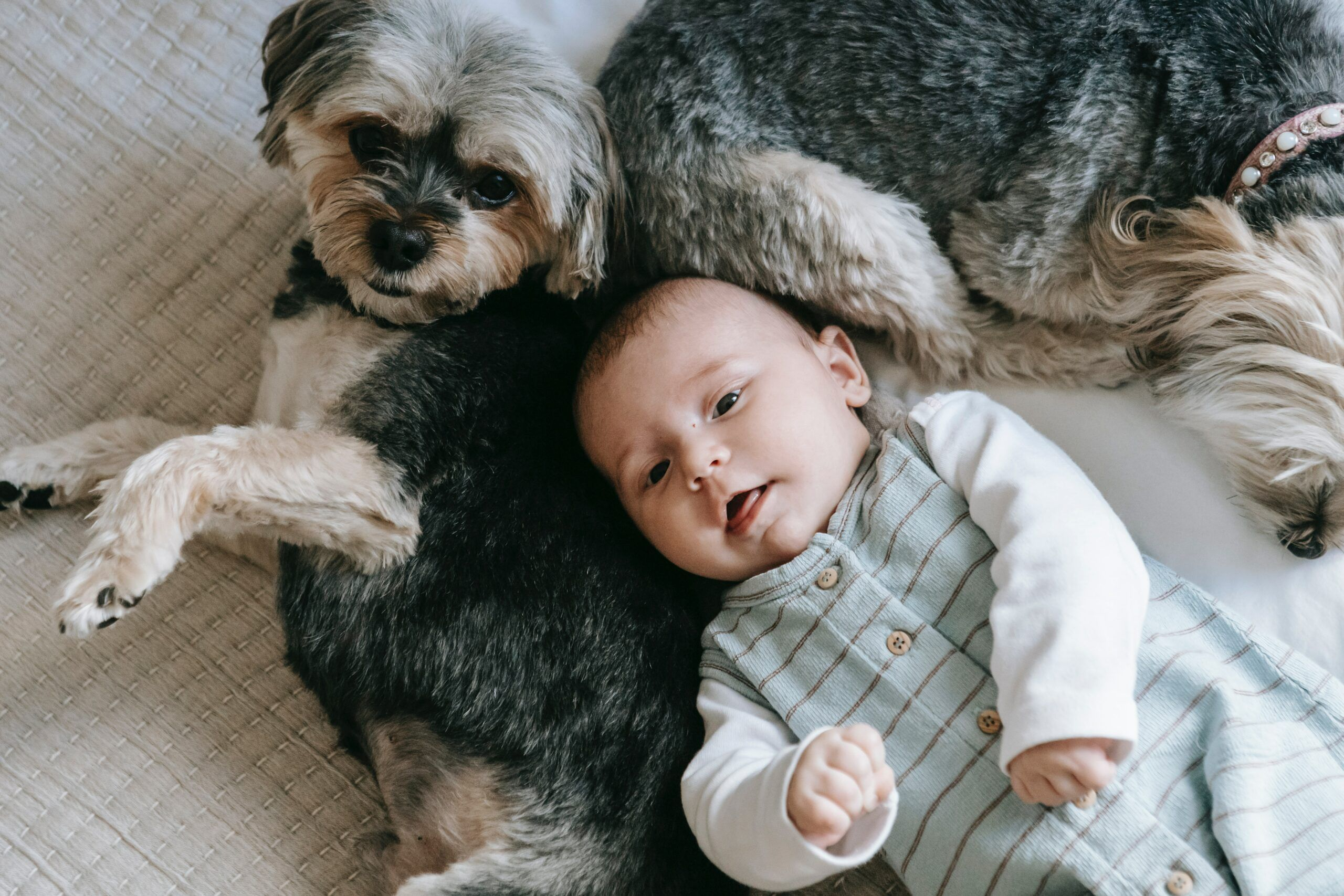 baby-and-dogs