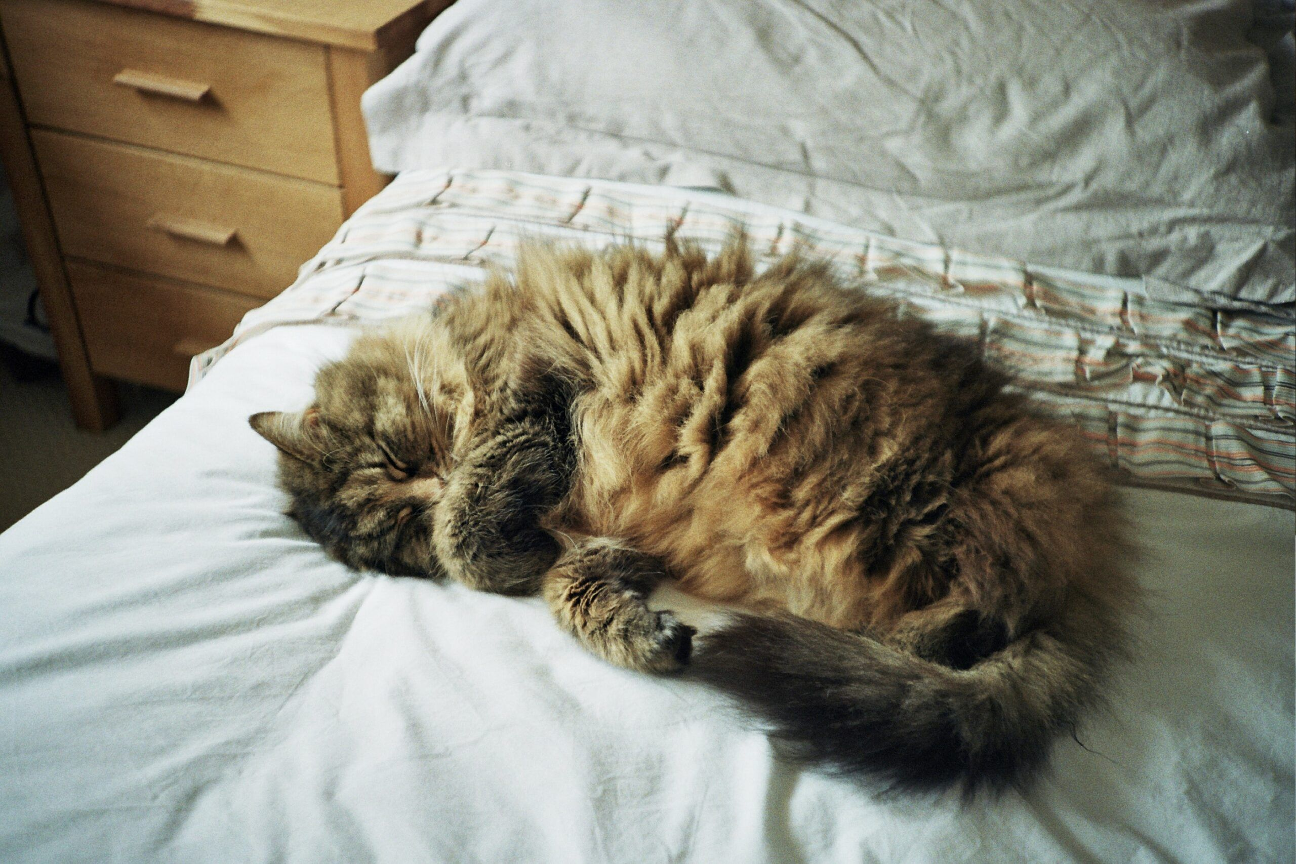 cat-in-bed